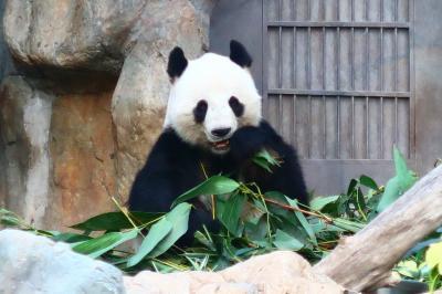 香港★お誕生日祝いで海洋公園へ! ~紅茶冰室・海洋公園~