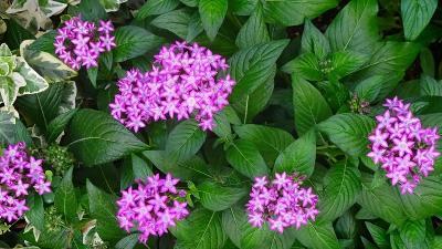 台風一過の笹原公園に咲く花 その1。