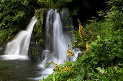◆雄宝香咲く羽鳥湖高原初秋の水辺