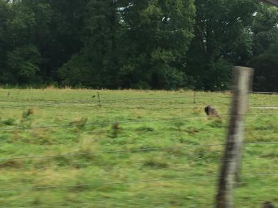 テネシー州 グレート スモーキー マウンテンズ国立公園 ー ケーズコーブに到着すると野生のターキーに遭遇