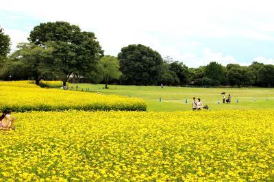 約1年振りの昭和記念公園、花散歩