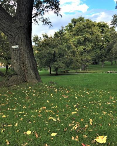 ☆ ネマニャ・ラドゥロヴィチのヴァイオリンコンサート♪札幌一人旅2日目。花の大通り公園と秋の気配の北大キャンパス散歩♪