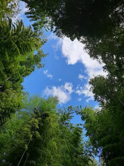 修善寺、竹林の小路、竹の隙間からの青い空