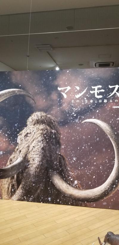ふらっと大阪南港へ「マンモス展~その「生命」は蘇るのか~」を見に来ました