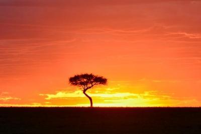 2019年 AFRICA Wonderful Safari in Kenya�(ナイバシャ湖からマサ…