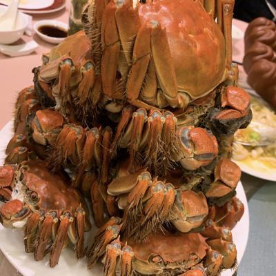 蟹とハイアットと私2