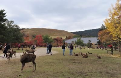 古都の紅葉(1) ☆ 奈良公園の傍らで一泊