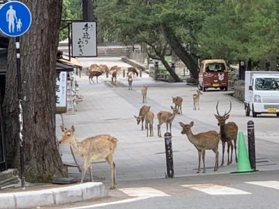 CORONA下の奈良公園!私だけの古都!