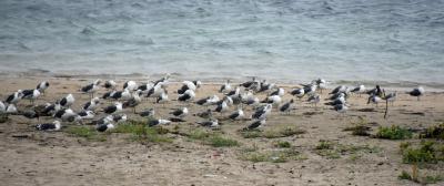 牡鹿半島沖の島めぐり 猫の楽園島と金華山に登る旅 2日目
