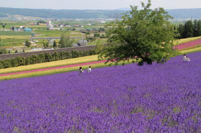 2020 美瑛・富良野 満開のラベンダーと丘の花畑