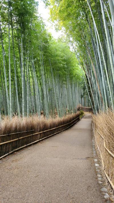 京都へ日帰り旅行 嵐山編