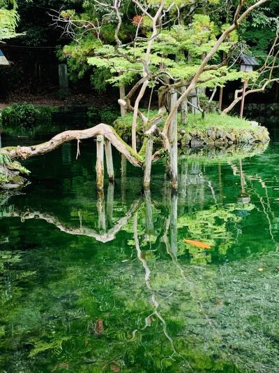 ここにも「モネの池」? 出原弁天池 日本名水百選 睡蓮あれば完璧…