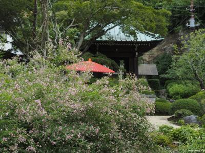 鎌倉の萩の名所へ