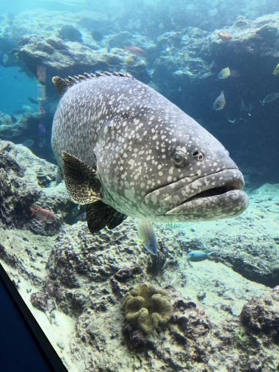 沖縄でお魚に癒される その1