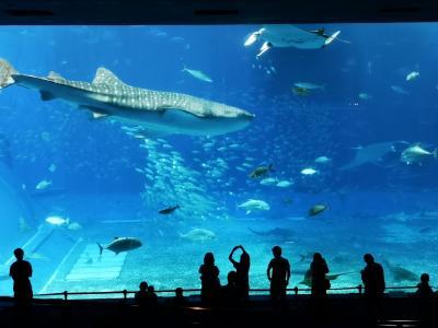 沖縄でお魚に癒される その2 美ら海水族館