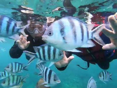 沖縄でお魚に癒される その6 真栄田岬