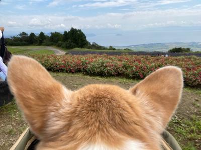 わんこと一緒に琵琶湖を眺めに