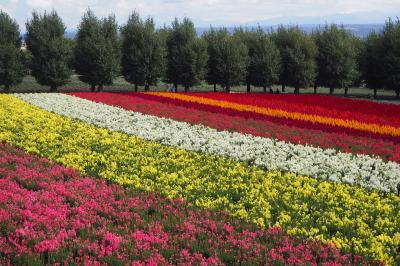 初秋の花畑へGO! in 中富良野町