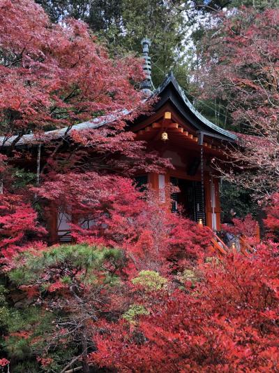 京都 紅葉狩り~毘沙門堂跡~