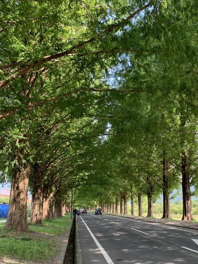 2020年9月 気分爽快♪琵琶湖と高原の風を浴びながらMTBで巡る♪「白鬚神社」~「メタセコイア並木道」~「湖西の竹林」~「琵琶湖大橋」~