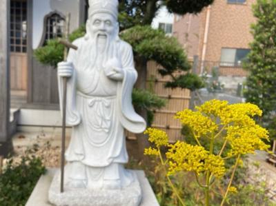 神奈川・平塚の須賀港と秋の七草巡り2020②~女郎花と尾花~