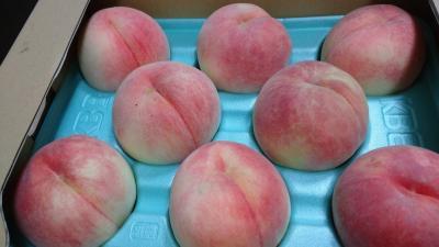 福島出張のついでに名残の桃を買い求めにさまようの巻