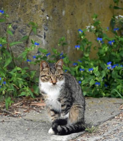 リベンジ!!牡鹿半島沖の島めぐり 猫の楽園島と金華山に登る旅 2日目