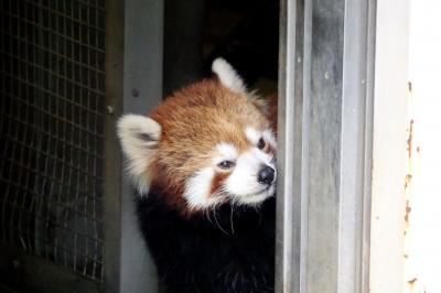 上野動物園&江戸川区自然動物園 3年8ヶ月ぶりの上野パンダは7ヶ月ぶりのカリンちゃんとルカちゃん@上野  相変わらずお美しい遊遊さん@江戸川
