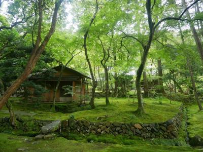 まるでジブリの世界のような苔寺と説法がめっぽう楽しい鈴虫寺へ