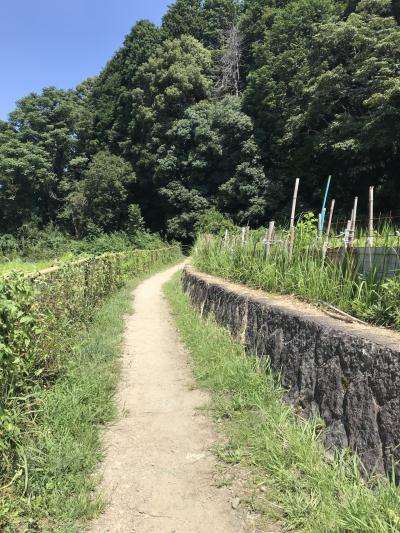 山辺の道 三輪~柳本