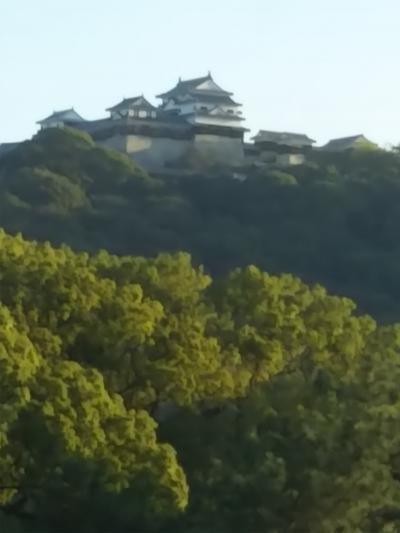 松山城を眺めてホテルステイ 松山市民が憩う城山公園に癒されて