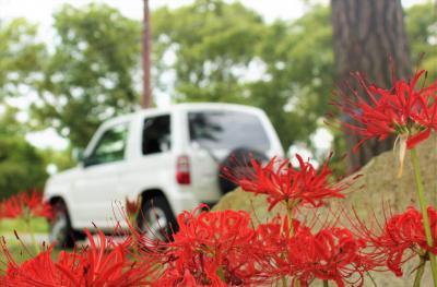 KIXに感謝を込めて! ラストドライブは 桂浜園地の彼岸花見物