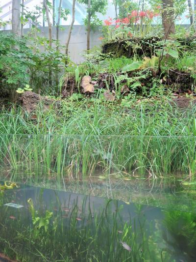 いわき-9 環境水族館 ≪川と沿岸-海獣/海鳥≫ 元自然を再現 ☆ヤマメ・トド・エトピリカ
