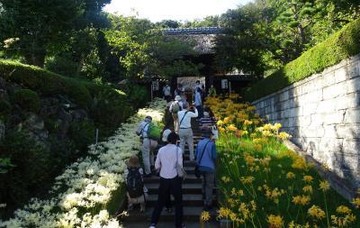 横浜西方寺の彼岸花 4色の彼岸花が見ごろ