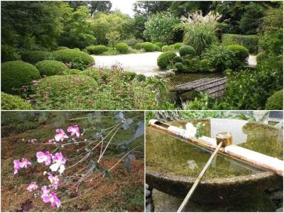 京都 初秋の庭園散策 詩仙堂・圓光寺2020