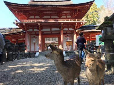 緊急事態宣言前の3月。1泊2日一人旅の奈良2:昼下がりの春日大社(神職さんによるガイドツアーに参加)