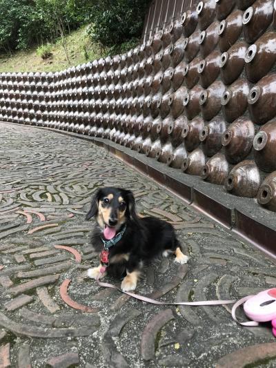 常滑焼きまつり。犬と焼き物散歩道を散歩と、イオンモール会場へ。