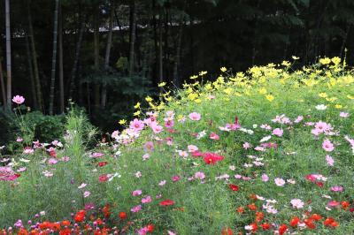 半年ぶりの花散歩、里山ガーデン・・・