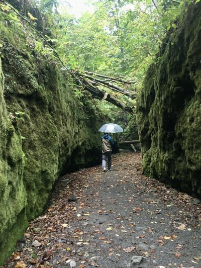 モッフモフ~苔の回廊に迷い込む~GoTo支笏湖グリーン!