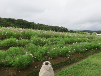Goto新潟 夫婦酒浸り旅 酒の宿とインスタスポット清津峡観光 Part1
