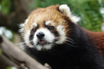 天王寺動物園&王子動物園 なんと8カ月ぶりとなる天王寺ズー、そして、ガイア君のケガの様子が気になる王子ズー