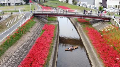 2020豊田市逢妻女川の満開の彼岸花