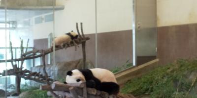 初めての和歌山。パンダを見に行こう!