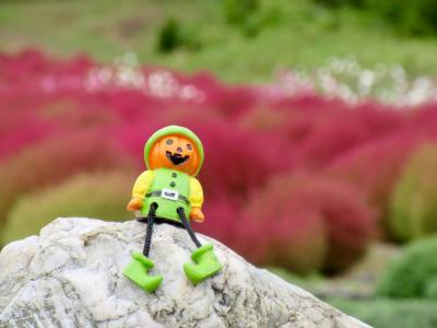 伊賀野の花畑 2020