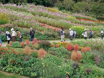 2020秋 横浜里山ガーデンフェスタの大花壇へ