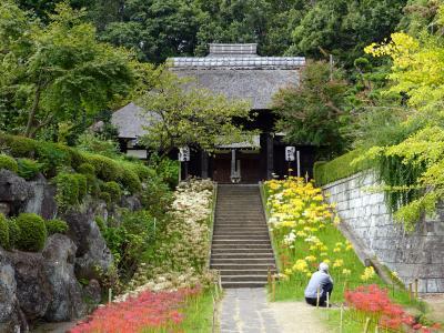 彼岸花の咲く寺(横浜西方寺)