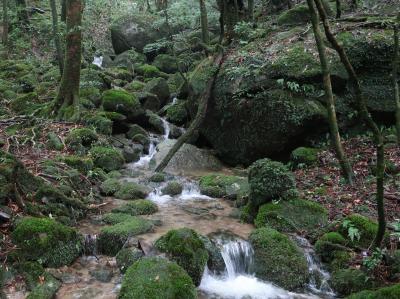 太古の森 屋久島3泊4日 ①白谷雲水峡と島の温泉