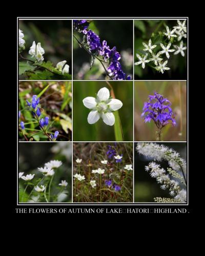 ◆秋の羽鳥湖高原*野の花便り+曼殊沙華