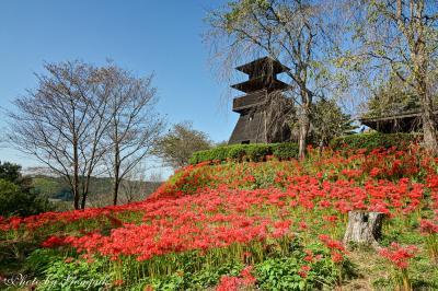 中世の山城跡に咲く50万本の彼岸花