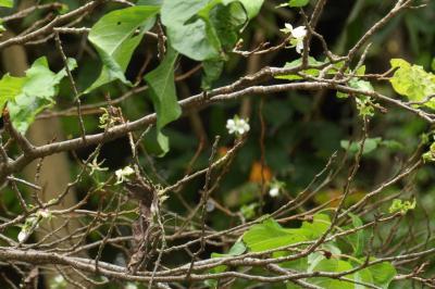 秋に咲く桜(小菅ヶ谷北公園自然観察ゾーン)